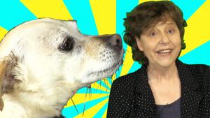 dog shelter story